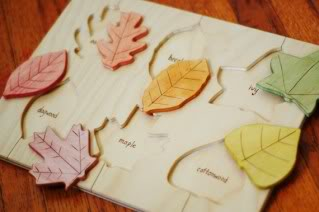 Lift a leaf and learn about a tree