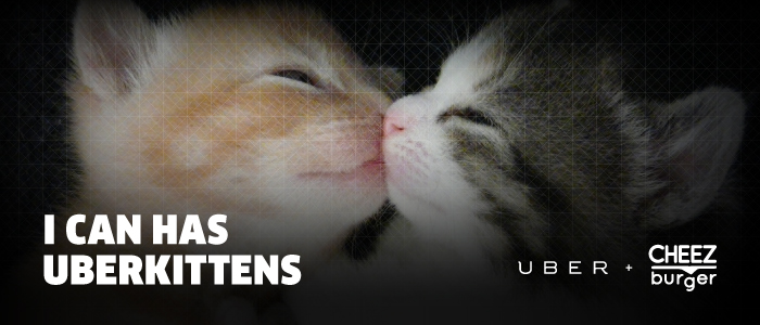 You can haz kittens and cupcakes on National Cat Day