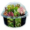 holiday gift: terrarium kit