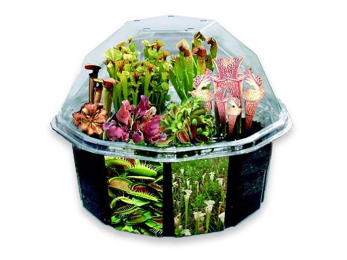 holiday gift: terrarium kit | cool mom picks