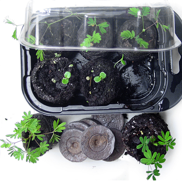 Zombie Plant Growing Kit from TickleMe Plants