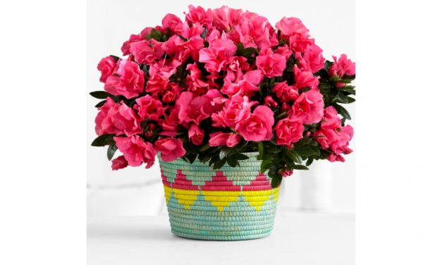 Mother's Day flowers that come in a vase that's even more special