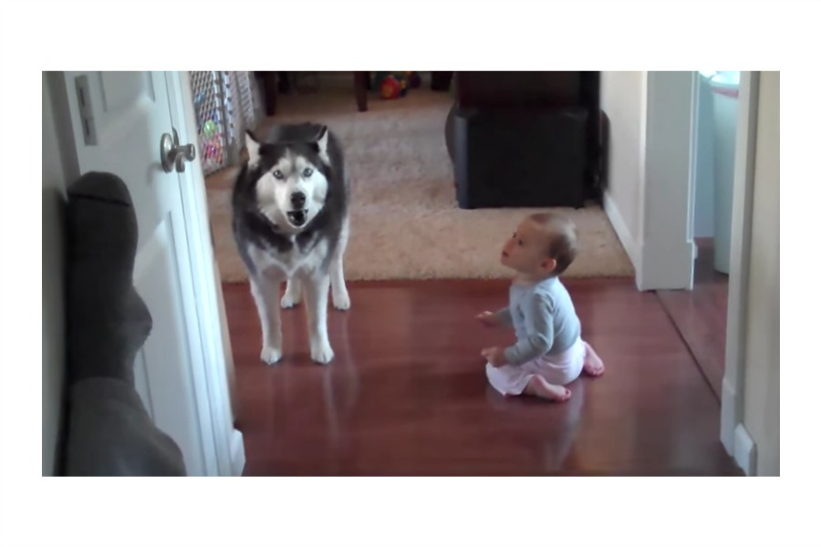 7 of the cutest kids and pets videos to keep your whole family laughing