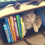 5 creative ways to organize your kids' books in less than a weekend