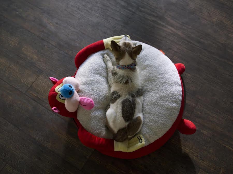 Stimpy dog bed! From the vintage 90s Nicktoons collection at BoxLunch: See it at coolmompicks.com