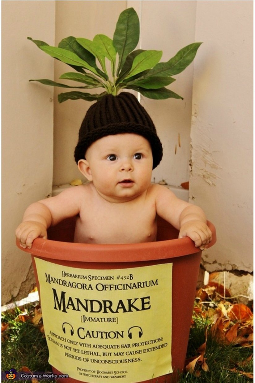 No-sew Halloween costumes: Harry Potter Baby Mandrake Halloween Costume | True Blue Halloween