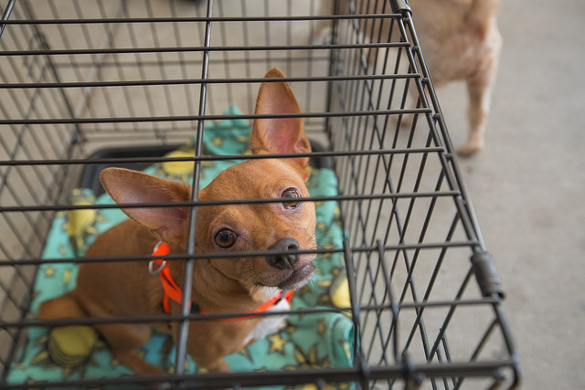 How to help the victims of Hurricane Irma: Donate and volunteer to help pets and animals