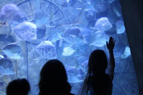 Atlantis Resort Bahamas – Disney meets Vegas meets pruney fingers