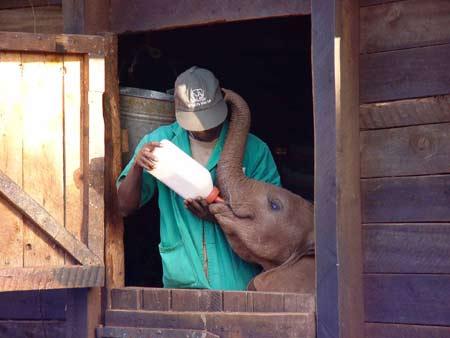 Sheldrick Wildlife Trust orphan elephant | Cool Mom Picks