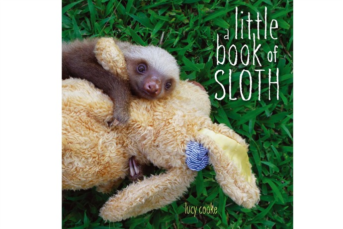 Sloth Week: A Little Book of Sloth | Cool Mom Picks