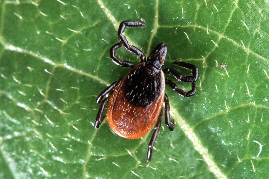 The panicky mom's guide to removing ticks from kids — yikes!