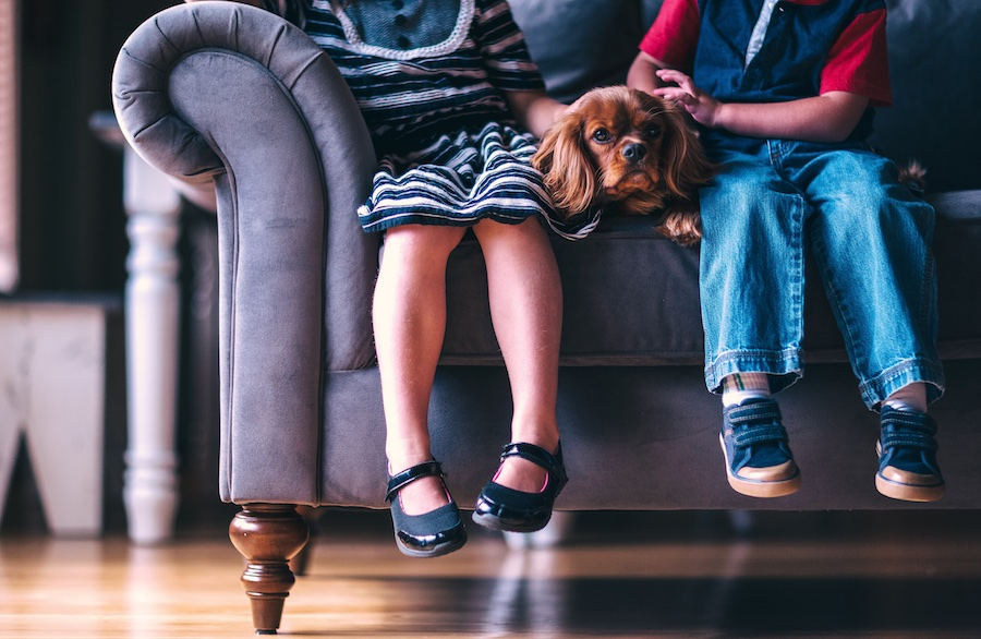 Lice myths parents should know: Do you have to have all your furniture cleaned? | coolmompicks.com