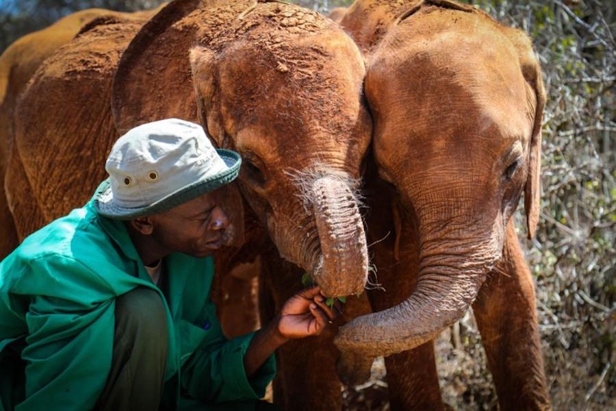 Last-minute holiday gift ideas: Donate to organizations like the David Sheldrick Wildlife