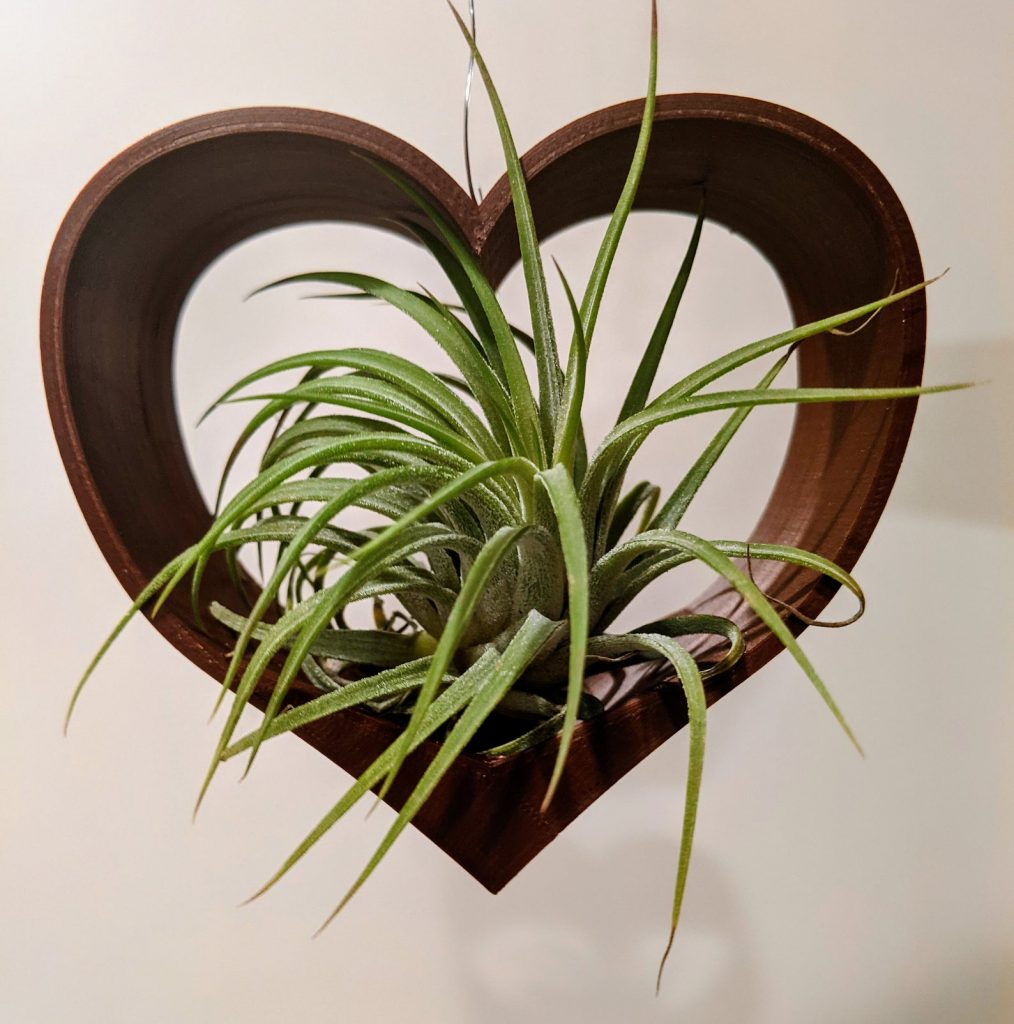 A sweet hanging air plant in a heart for Mother's Day