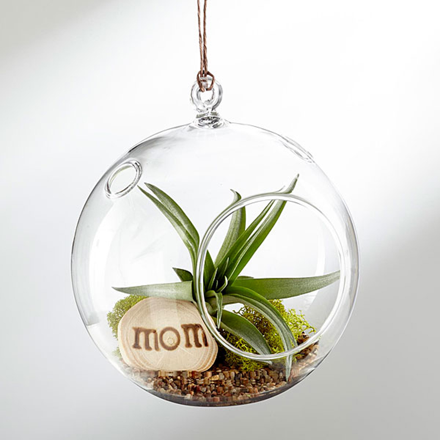 Flower alternatives for Mother's Day: A hanging air plant