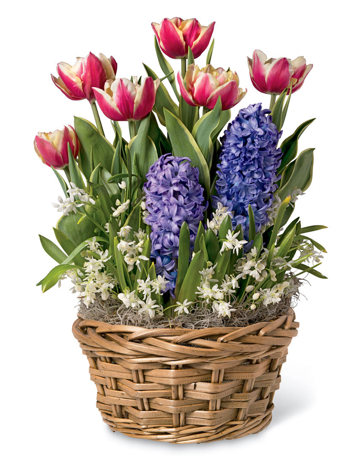 Flower alternatives for Mother's Day: A total bulb garden in a basket