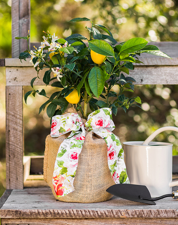Mother's Day Bouquet Alternatives: Lemon Tree