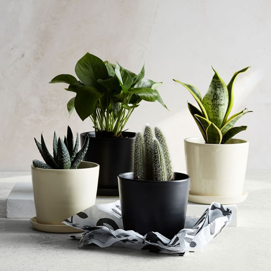 Flower alternatives for Mother's Day: Beautifully potted modern plants from NYC's The Sill via West Elm