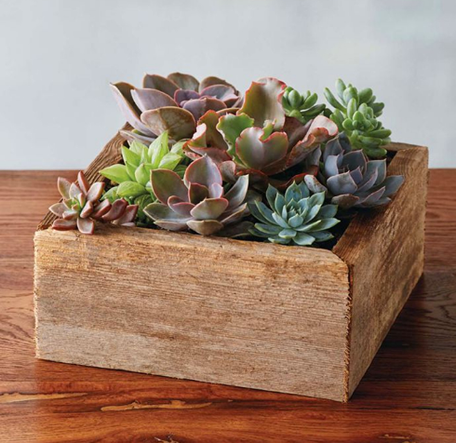 Flower alternatives for Mother's Day: Boxed succulents