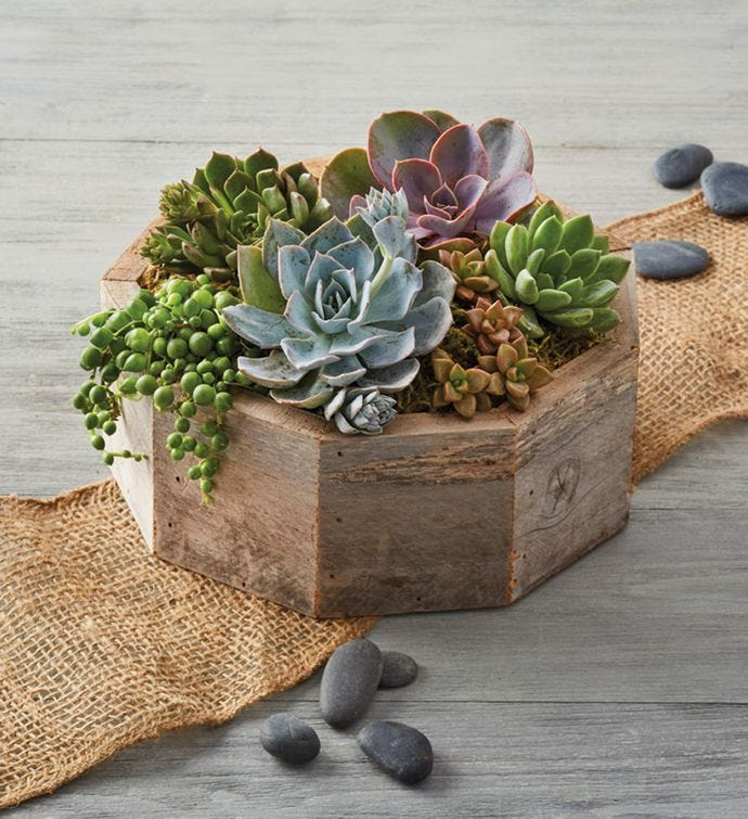Flower alternatives for Mother's Day: succulents in a reclaimed wooden crate is rustic and beautiful with any decor