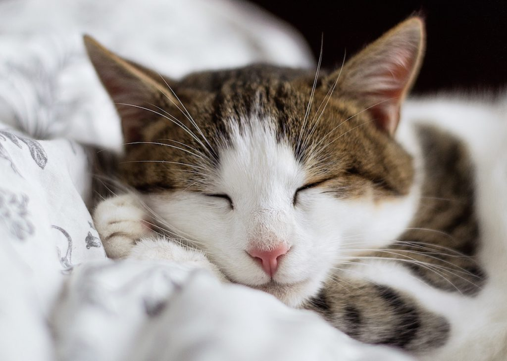 Comfort items: Photo of a favorite pet is one way to help comfort kids who are anxious in those early days of school