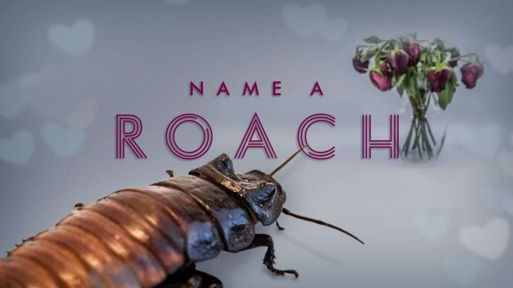 Valentine's gifts for people who hate Valentine's Day : Bronx Zoo lets you name a roach in someone's honor!