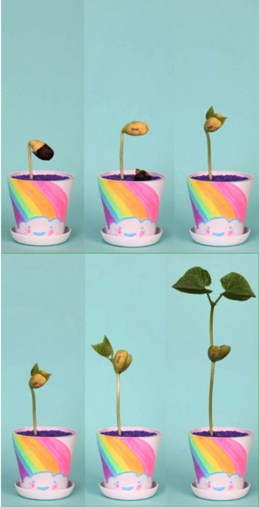 Easter basket ideas for kids under $20: Creativity for Kids Grow-Your-Own Magic Beans Garden
