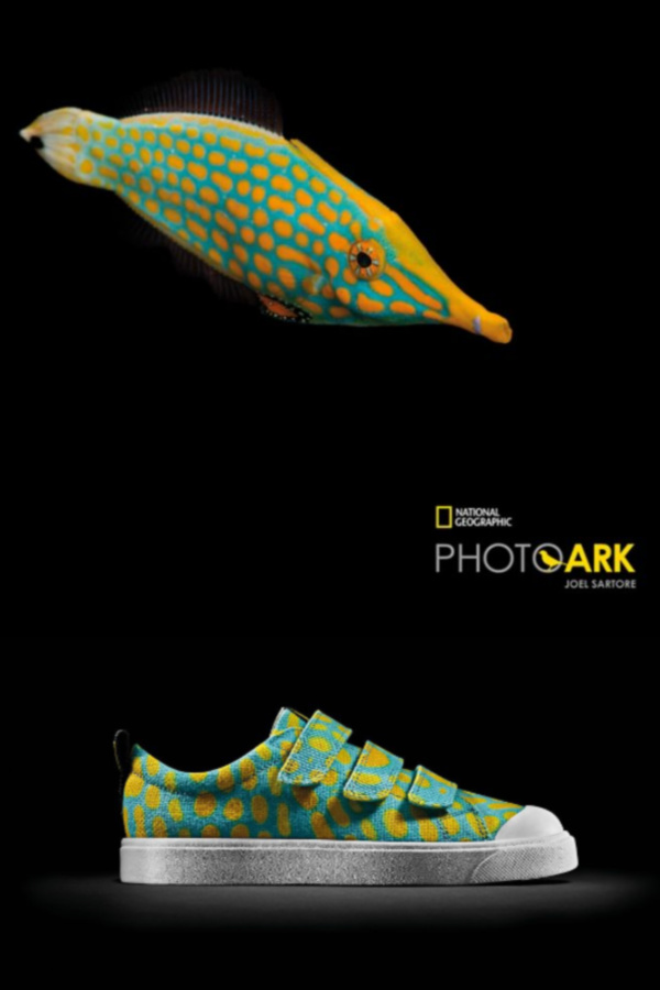 b279c74753 Clarks Kids x National Geographic eco-friendly sneakers for kids inspired  by the Harlequin Filefish