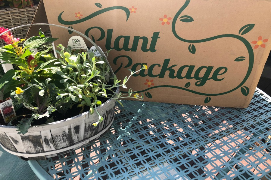 Plant Package: A brilliant way to give the gift of a green thumb