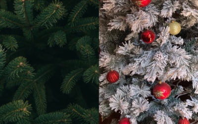 Yes, real Christmas trees are better for the environment than artificial trees. Here are the facts.