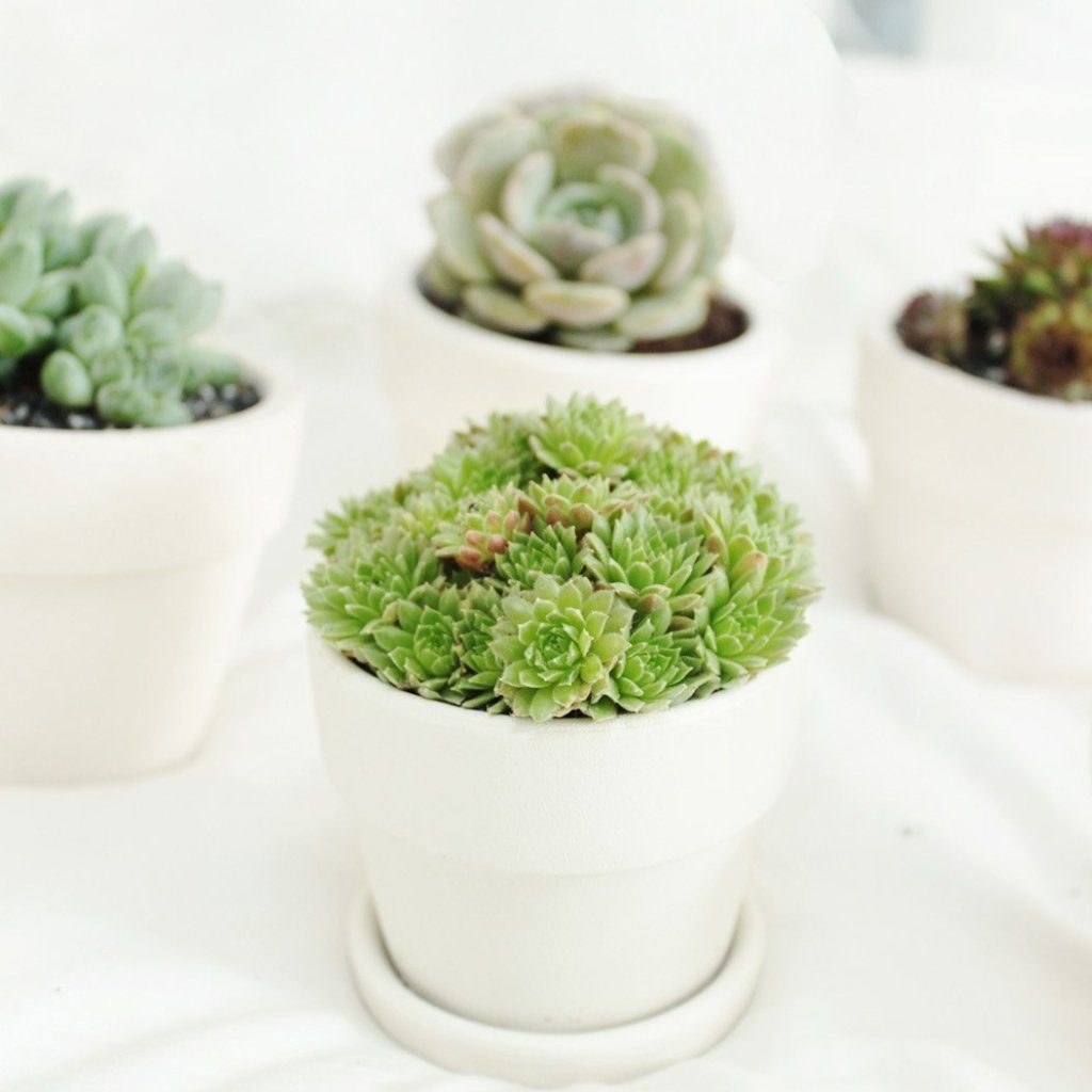 A succulent monthly gift subscription that gives back to support reforestation efforts