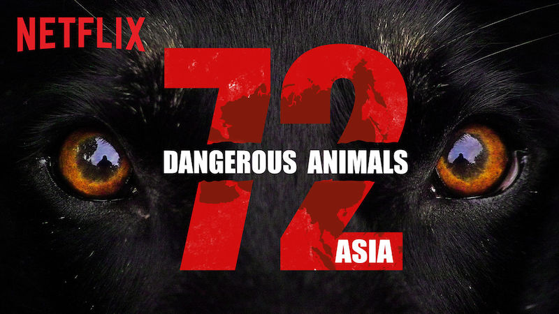 Educational documentaries for kids: 72 Dangerous Animals