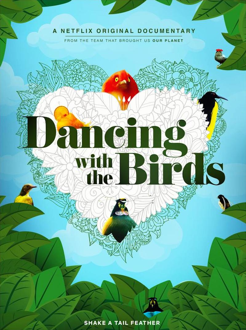 Educational documentaries for kids: Dancing with the Birds