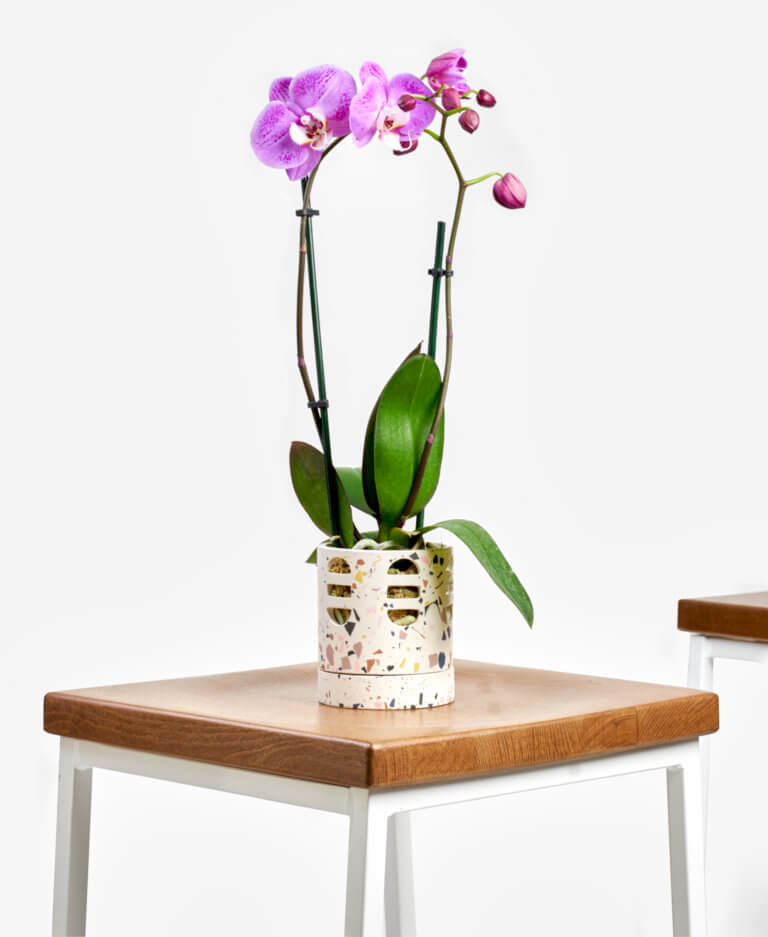 Meaningful Mother's Day gifts for mom or grandma: A bouquet of flowers or an orchid that lasts | Mother's Day Gift Guide