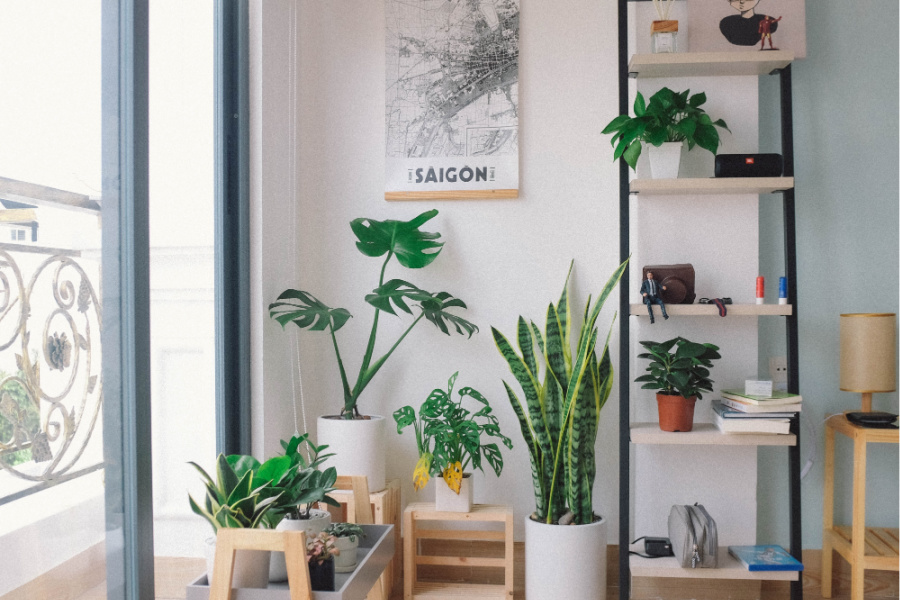 These 5 awesome Etsy houseplant shops are perfect pandemic pick-me-ups