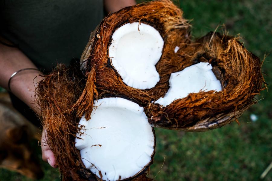 Is coconut sugar really a healthy sugar alternative?